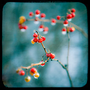 Gary Heller Metal Prints - Berry Nice - Red Berries - Winter frost Icy Red Berries - Gary Heller Metal Print by Gary Heller