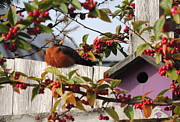 Karen Horn - Berry Stuffed Robin