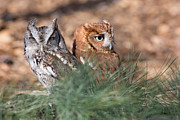 Owl Metal Prints - Best Friends Metal Print by Dale Kincaid