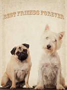 Pug Dogs Prints - Best Friends Forever Print by Edward Fielding