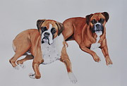 Boxers Framed Prints - Best Friends Framed Print by John W Walker