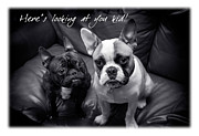 Valentines Day Framed Prints - Best Friends Framed Print by Mal Bray