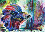 Betta Framed Prints - Betta Framed Print by Zaira Dzhaubaeva