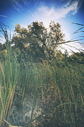 Reeds Photos - Beyond the Grass by Laurie Search