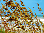 Lorraine Heath - Beyond the Sea Oats Lies...