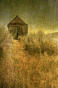Barn Boards Prints - Beyond the Weeds Print by Margie Hurwich