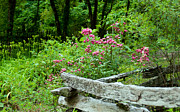 Split Rail Fence Prints - Beyound the Fence Print by Sandra Clark
