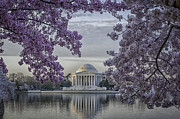 Reflections In River Prints - Bi-color framing of the Jefferson Memorial with cherry blossoms 72 Print by Mark Serfass