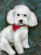 Breed Pastels Framed Prints - Bichon CoCo Framed Print by Lenore Gaudet
