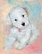 Maltese Dog Posters - Bichon Maltipoo Puppy Dog Poster by Robert Jensen