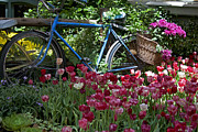 In My Life Photos - Bicycle in My Garden by Ivete Basso