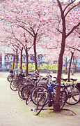 Cherry Art Framed Prints - Bicycles under the Blooming Trees. Pink Spring in Amsterdam  Framed Print by Jenny Rainbow