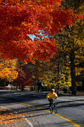 Bike Photos - Bicyclist in Park during Autumn by Amy Cicconi
