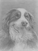 Pet Drawings Prints - Big Berner Print by Pamela Humbargar