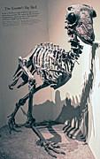 Gregory Dyer - Big Birds Bones
