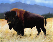 Montana Digital Art Framed Prints - Big Bison Framed Print by Robert Foster