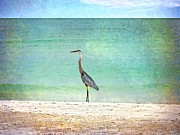 Judy Hall-Folde - Big Blue Heron