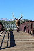 All - Big Bull On The Bridge by Shane Bechler