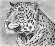 Spot Drawings Posters - Big Cat Poster by Lena Auxier