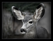 Big Ears Framed Prints - Big Ears Framed Print by Ernie Echols