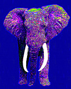 Circus Elephant Posters - Big Elephant 20130201m118 Poster by Wingsdomain Art and Photography