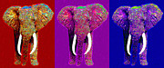 Tusk Digital Art Prints - Big Elephant Three 20130201v2 Print by Wingsdomain Art and Photography