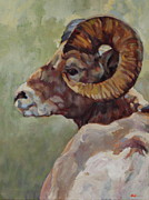 Big Horn Sheep Framed Prints - Big Horn In Sage Framed Print by Patricia A Griffin