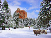 Evergreen Trees Photo Posters - Big Horn Sheep at Glen Eyrie Poster by John Hoffman