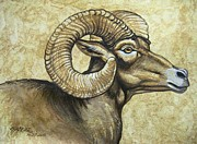 Amate Bark Paper Prints - Big Horned Ram Profile Print by Anne Shoemaker-Magdaleno