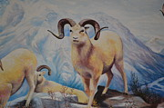 Anne-Elizabeth Whiteway - Big-Horned Sheep