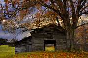 Tennessee Barn Prints - Big Oak Print by Debra and Dave Vanderlaan