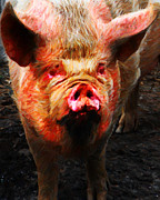Pig Digital Art Metal Prints - Big Pig - 2013-0107 - Painterly Metal Print by Wingsdomain Art and Photography