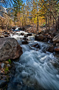 Creek Prints - Big Pine Creek Print by Cat Connor