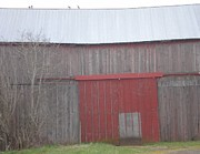 Birds On Barn Prints - Big Red Barn Door Print by Suzanne McKay