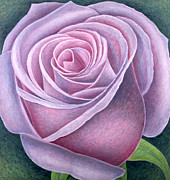 Bud Painting Framed Prints - Big Rose Framed Print by Ruth Addinall