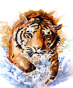 Tigers Paintings - Big Splash by Steven Ponsford