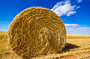 Big Straw Bales Print by Boon Mee