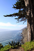 Tree Leaf Prints - Big Sur Coastline Print by Linda Woods