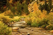 Fall Colors Digital Art Originals - Big Thompson River 8 by Jon Burch