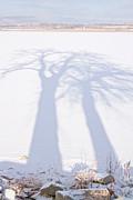 James BO  Insogna - Big Tree Shadow Portrait