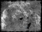 Kodiak Digital Art Prints - BIG WHITE FUZZY BEAR - Featured in Nature Wildlife Group Print by EricaMaxine  Price
