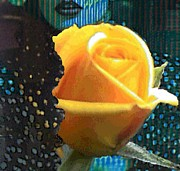 Navo Art - Big Yellow Rose