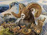 Ewes Art - Bighorn lifescape by Steve Spencer