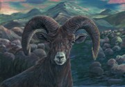 Bighorn Sheep Print by Tom Blodgett Jr