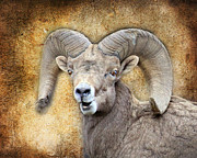 Other World Posters - Bighorn Textures Poster by Steve McKinzie