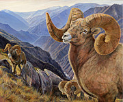 Wildlife Landscape Paintings - Bighorn Trio by Steve Spencer