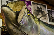Mounted Fish Prints - Bigmouth Mounted Fish Print by Anne Keckler