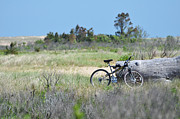 Bicycle Collage Prints - Bike in the Dunes - East Hampton Print by Adspice Studios