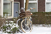 Patricia Hofmeester - Bikes in the snow