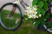 Bicycle Photos - Biking Season In Bloom - Featured 2 by Alexander Senin